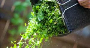 dumping-grass-clippings